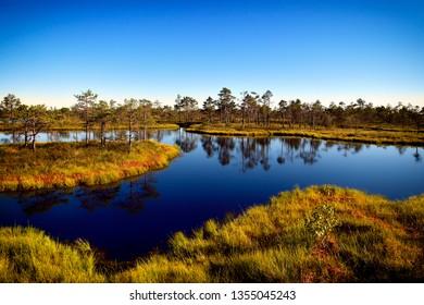 Swamp in the National park of Kemeri in Jurmala, Latvia