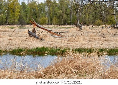 Swamp on the Narew River