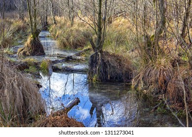 Swamp (or carr) in winter. A swamp is a wetland that is forested with alder trees, covered by aquatic vegetation. Was seen in Brandenburg, Germany, in the Nature Park Nuthe-Nieplitz.