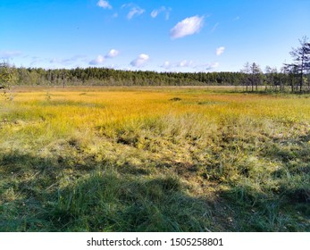 swamp in the park in russia