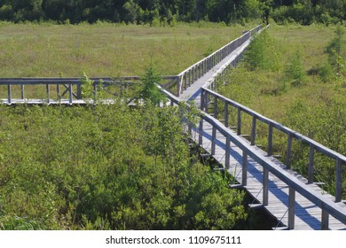 swamp park wood path nature landscape ecology wetland boardwalk