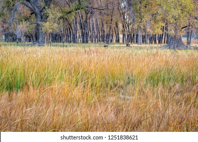 swamp, pasture, trees - rural landscape of northern Colorado along the Poudre River in fall scenery