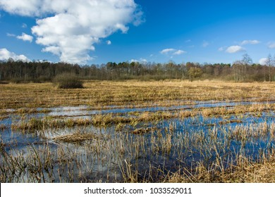 Swamp Serebryskie and forest on a sunny day. Poland