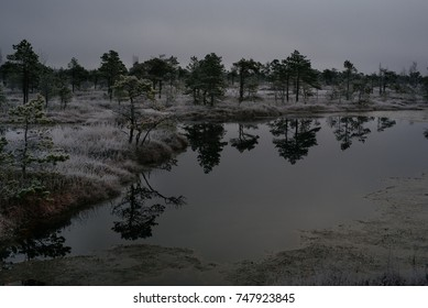 Swamp with small pine trees covered in early winter morning frost reflecting in pond. Kemeri national park at sunrise, Latvia. Vintage look with grain.