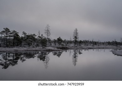 Swamp with small pine trees covered in early winter morning frost reflecting in pond. Kemeri national park at sunrise, Latvia.