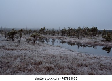Swamp with small pine trees covered in early morning frost reflecting in small pond. Kemeri national park at sunrise, Latvia. Vintage, retro look with grain.