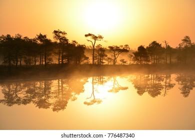 Swamp in sunrise