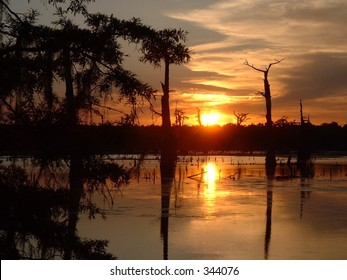 Swamp Sunset