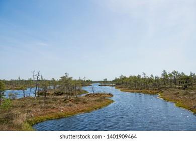 Swamp trail. Summer sunny Day. Kemeri National Park Nature Trail.