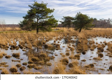 Swamp with trees in national park De Groote Peel in The Netherlands