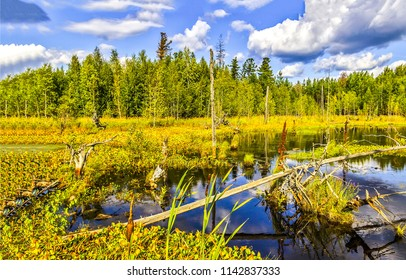 Swamp water forest trees landscape. Forest swamp land water view. Marshland swamp water trees panorama