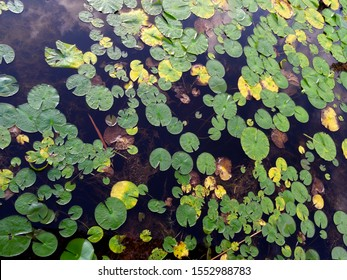 swamp water lilly environment marsh ecology waterlily nature
