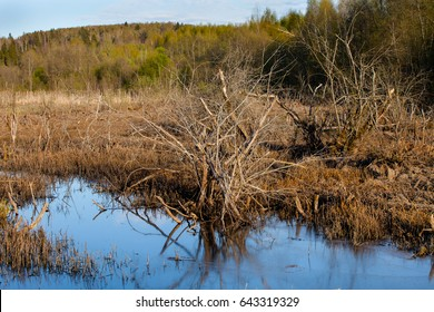 Swamped field  in front of forest