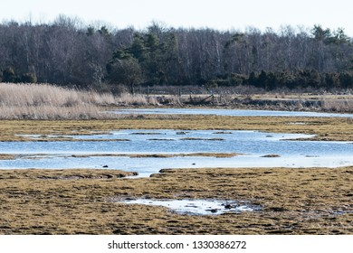 Swampland by early springtime at the swedish nature reserve Beijershamn on the island Oland