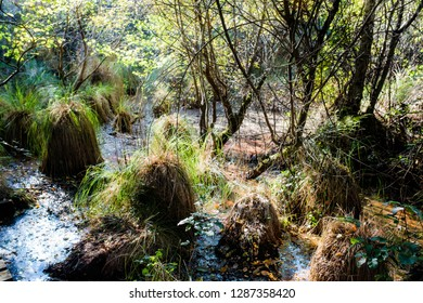 Swamps in the Moors