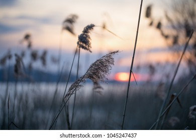 Swamps overgrown with reeds. Colorful evening and sunset over a polish lake, winter in Masuria Lake District. Nature in Poland.