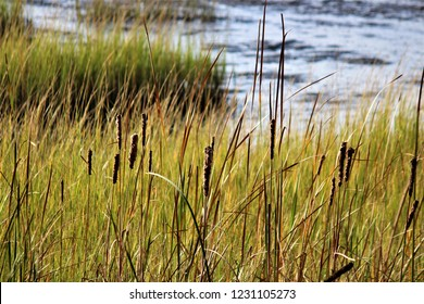 Swamps in South Carolina with tall grasses
