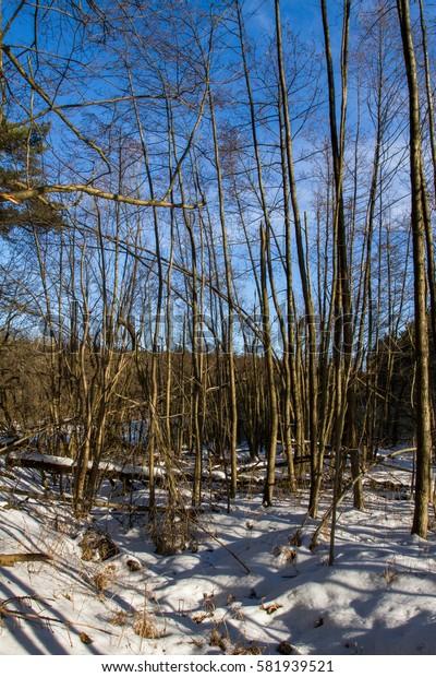 Swamps in winter.