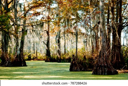 Swampy Bayou in Louisiana