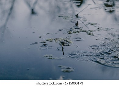 Swampy destination. Dirty water, broken trees. Bog place. Reflection in the water. Marsh green grass. Blue grey brown. Blue water. Rainforest swamp. Natural scenery. Mangrove in lake. Swamp in forest