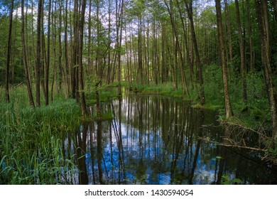 Swampy forest with creek and tree reflections