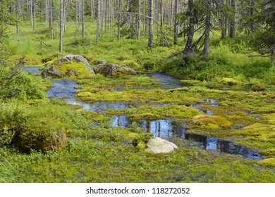 Swampy forest river