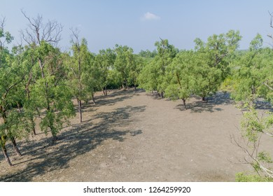Swampy mangrove forest at Hiron Point in Sundarbans, Bangladesh