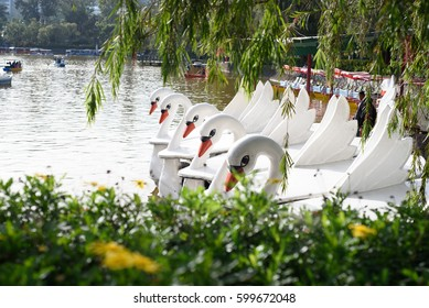 Swan boat at the park