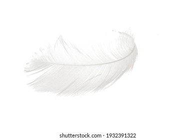 swan feather isolated on white background