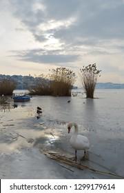 Swan in half frozen lake in town of Kastoria in Greece as background