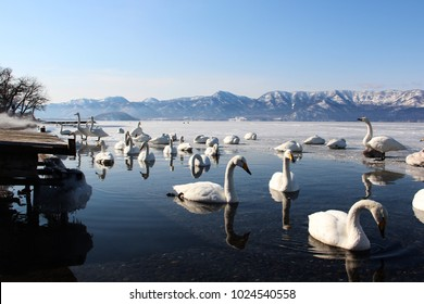 Swan park lake Tofutsuko in Abashiri Hokkaido Japan.