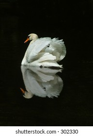 Swan and reflection