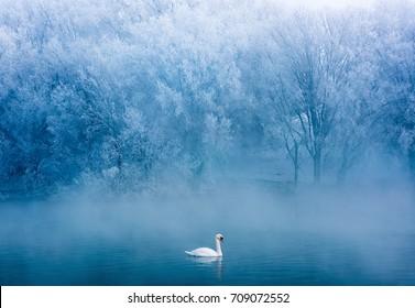 Swan spring, Xinjiang, Yili 3