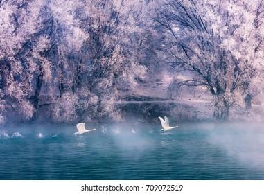 Swan spring, Xinjiang, Yili 7