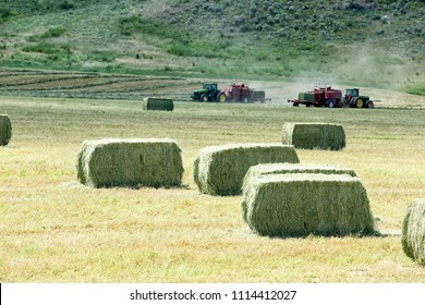 Swan Valley, Idaho, USA July 1, 2013 Alfalfa hay, is baled in large retangular bales for winter storage in the fertile farm fields of Idaho.