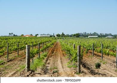 Swan Valley Vineyards - Perth - Australia