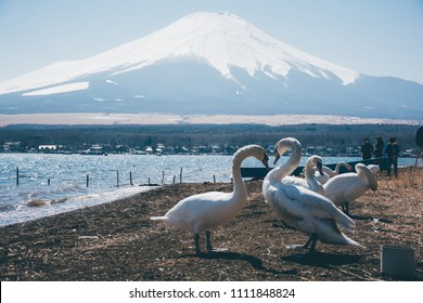 Swan and Yamanaka lake and Fuji mountain view taken from lakeshore