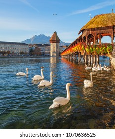 Swans at the famous Chapel Bridge over the Reuss river in the city of Lucerne, Switzerland, summit of Mt. Pilatus in the background.