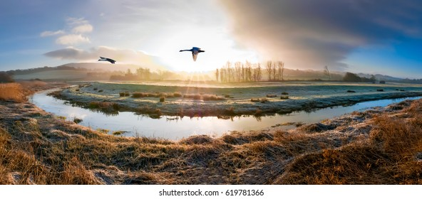 Swans flying over the river Cuckmere on a frosty morning near Alfriston in the South Downs National Park, southern England.