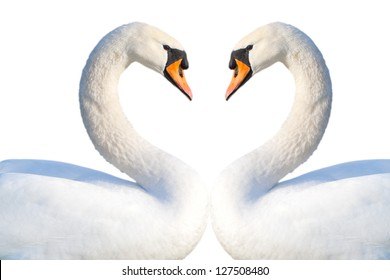 Swans heart isolated on white.