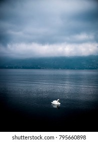 swans in Lake Maggiore in winter, Ispra, Lombardy, Italy