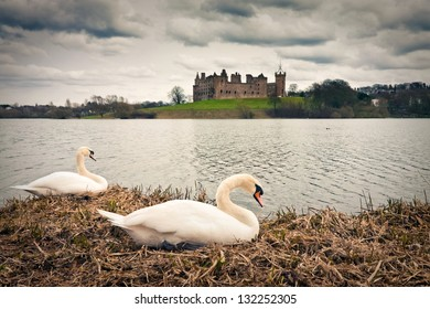 Swans at Linlithgow palace