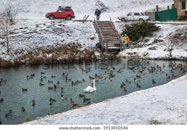 swans-mallard-ducks-swim-blue-600w-19134