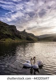 Swans on St Margaret's Loch, Edinburgh, Scotland, UK
