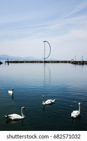 Swans at Ouchy Port of Lausanne, Switzerland