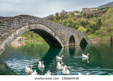 Swans swimming under the ancient stone arch bridge  in Rijeka Crnojevica on a rainy day, Montenegro