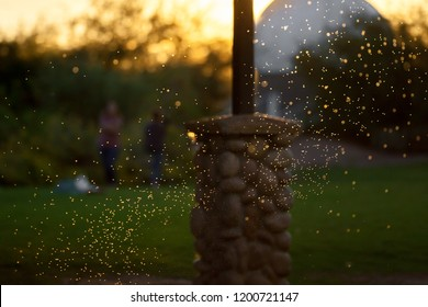 A swarm of backlit mosquitos or gnats flying around under a picnic cabana at a park.  The are at differing distances from the camera and some are in focus others look like points of light.