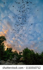 Swarm of bats flew off their cave in the evening