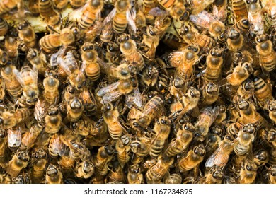 swarm of bees background