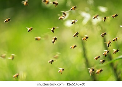 Swarm of bees in flight on a nice sunny day